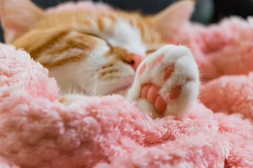 毛布の包まって眠る猫