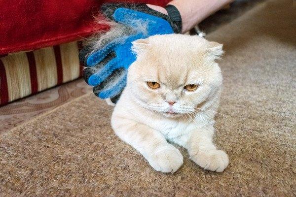 グローブで撫でられる猫