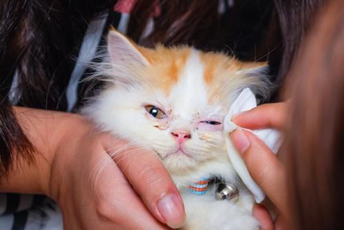 目の周りを拭かれている子猫