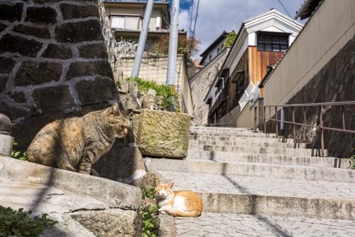 路地でくつろぐさび猫