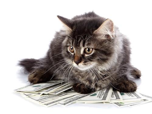 紙幣の上でくつろぐ猫