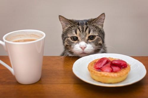 ケーキとカフェを前にする猫
