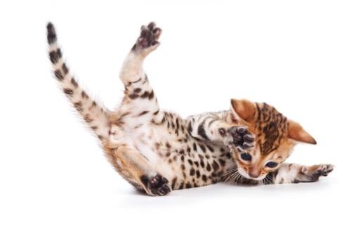 ジャンプの着地に失敗した子猫