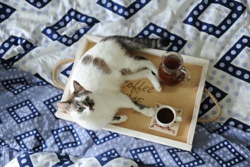 トレイの上にのった飲み物と猫