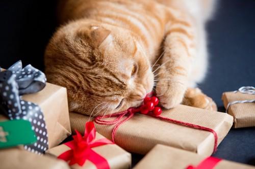 猫とプレゼント