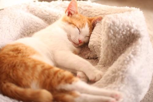 ふかふかのベットで眠る猫