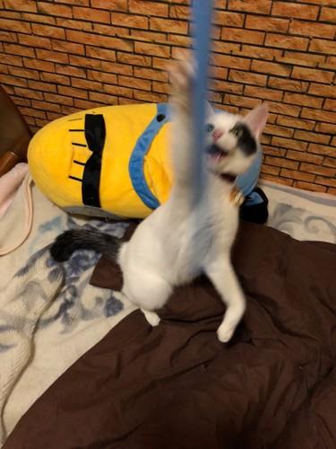 激しくおもちゃで遊ぶ子猫
