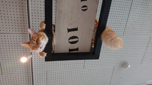 猫まる茶屋