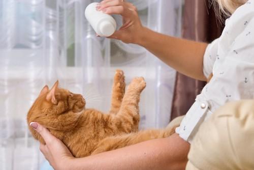 猫にパウダータイプのドライシャンプーをふりかける女性