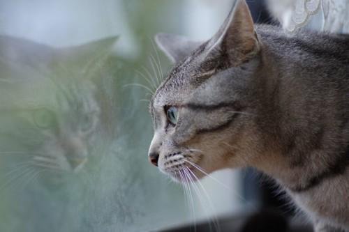 目を見開いて外を見る猫