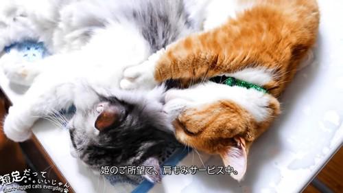 長毛猫の肩を揉む猫