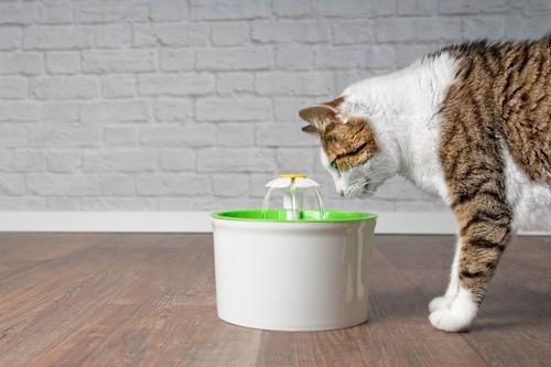 お水を飲もうとしている猫