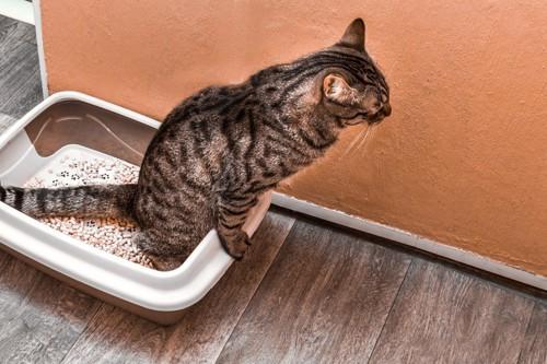 廊下のトイレにいる猫