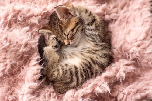 丸まって眠る子猫