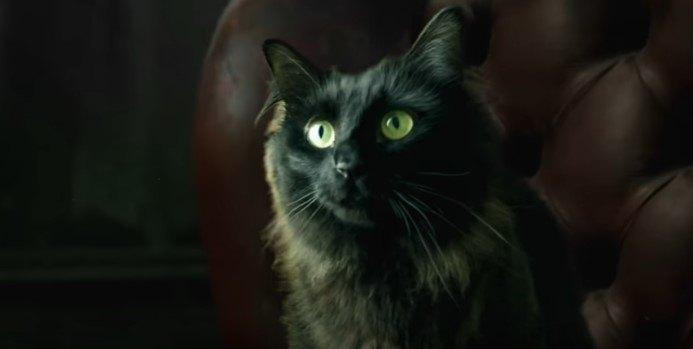 前を見つめるアウル・キティ