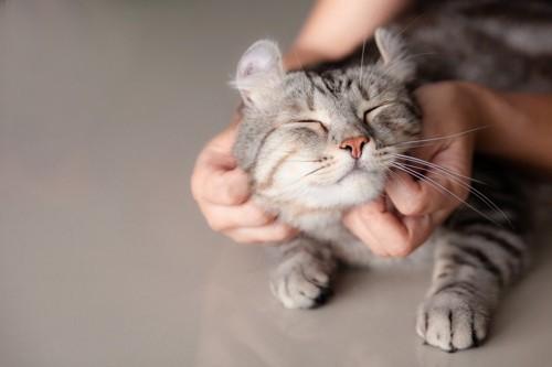 あごの下を撫でられる猫