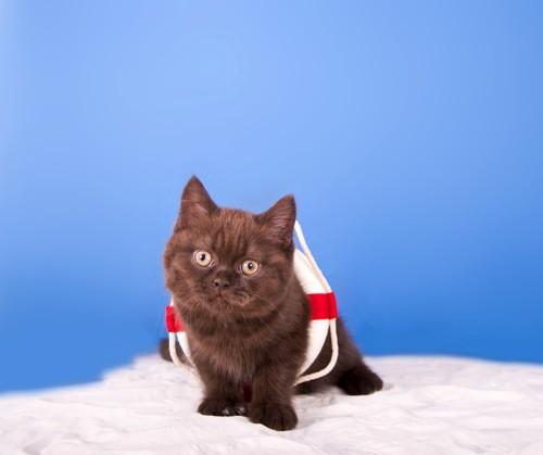 うきわを付ける黒猫