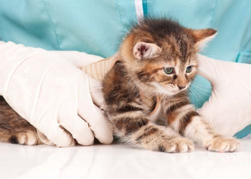 固定されている猫