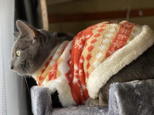 温かい服をきた猫