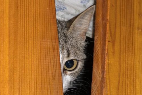 監視している猫