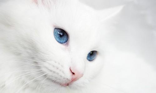 グレ-の猫