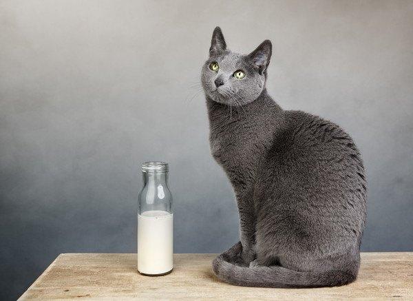 牛乳瓶と猫