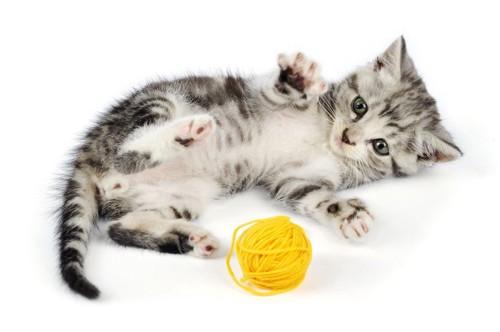 毛糸玉で遊ぶ猫