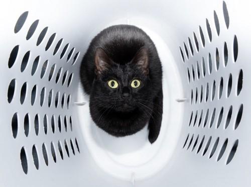 洗濯かごに入っている黒猫