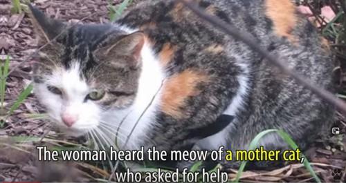 うずくまる三毛猫