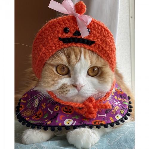 赤い被り物した猫
