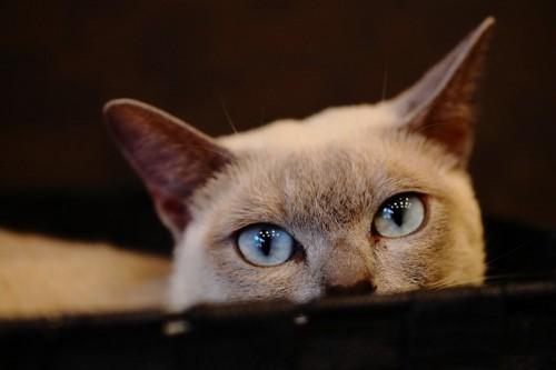 輝く猫の目イメージ