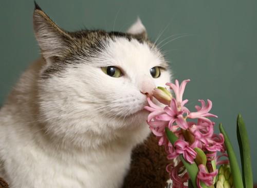 花を嗅いでいる猫
