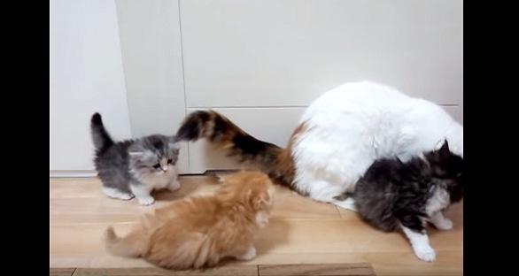 母猫の後ろに付く子猫