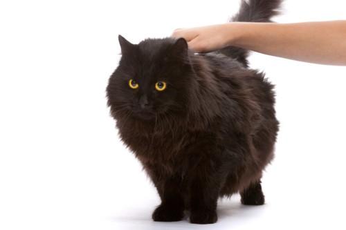 背中を触れる黒猫
