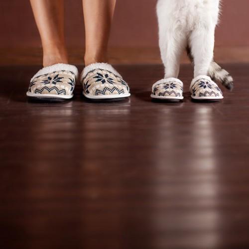スリッパを履いた人と猫の足