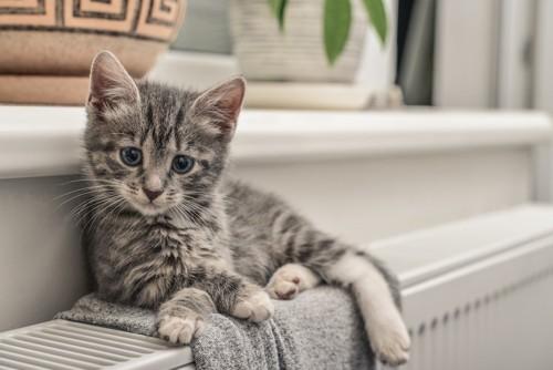 暖房の上に乗る子猫