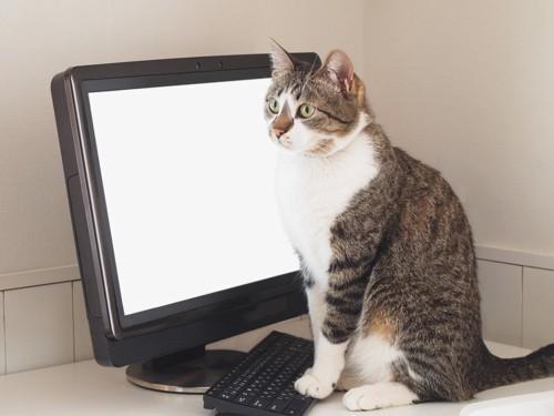 パソコンの前の猫