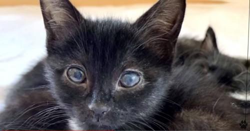 黒い子猫の顔アップ