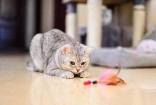 おもちゃの羽を狙う猫