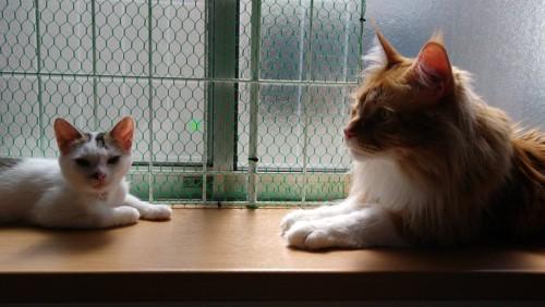 窓側に猫2匹