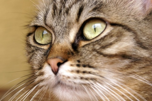 猫のひげのアップ