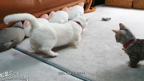 走り出す白猫