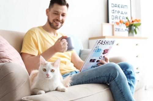 ソファに座る男性と猫