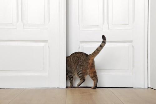 ドアから退出する猫