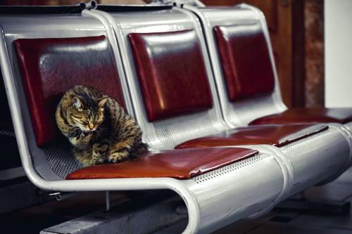 ベンチの上で毛繕いをしている猫