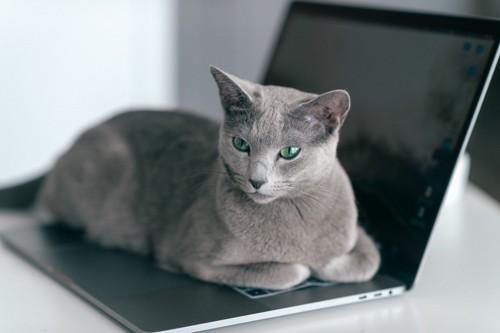 ノートPCのキーボードの上に乗る猫