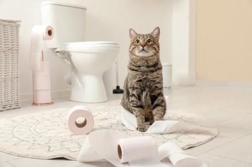 トイレの前にいる猫