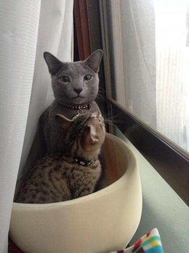 窓辺にいる2匹の猫
