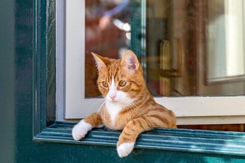 窓に手をかけて外を見ている猫