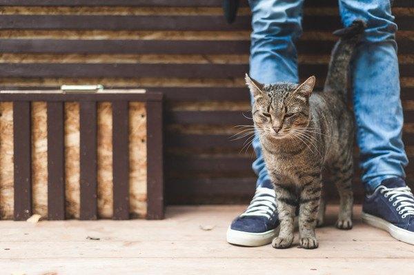 足の間にすり寄る猫